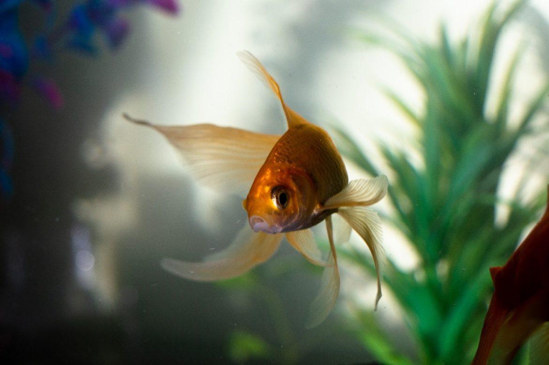 Der Sinn des Lebens – Gefangen im Goldfischglas
